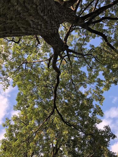 a tree with a sunny sky.